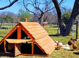 Portable chicken duck coop for 18 hens best big chicken for Movable duck house